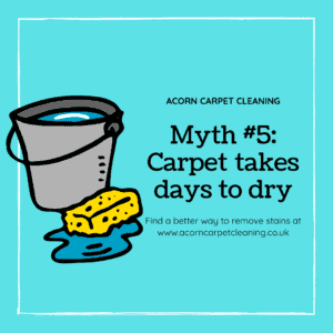 Debunking Carpet Drying Myth