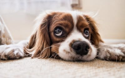 Carpet Cleaning and Care Tips for Pet Owners